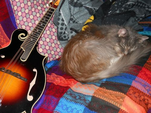mandolin cat