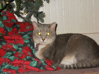 Little Kitty under Christmas tree