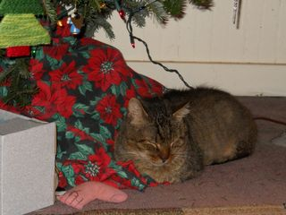 Linus Kitty under Christmas tree