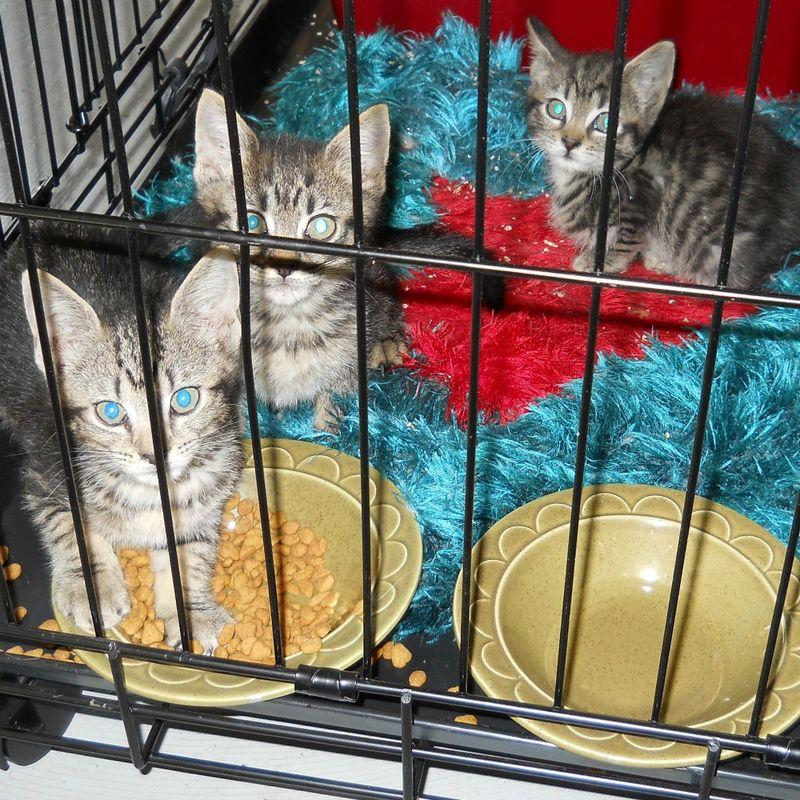 Kittens0105